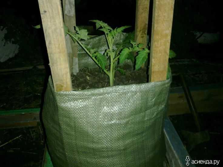 Шампиньоны выращивание домашних условиях фото