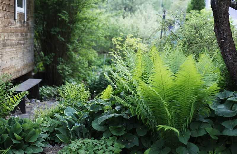 Что можно посадить в тени или секреты успешного выращивания растений под деревьями на небольшом участке?
