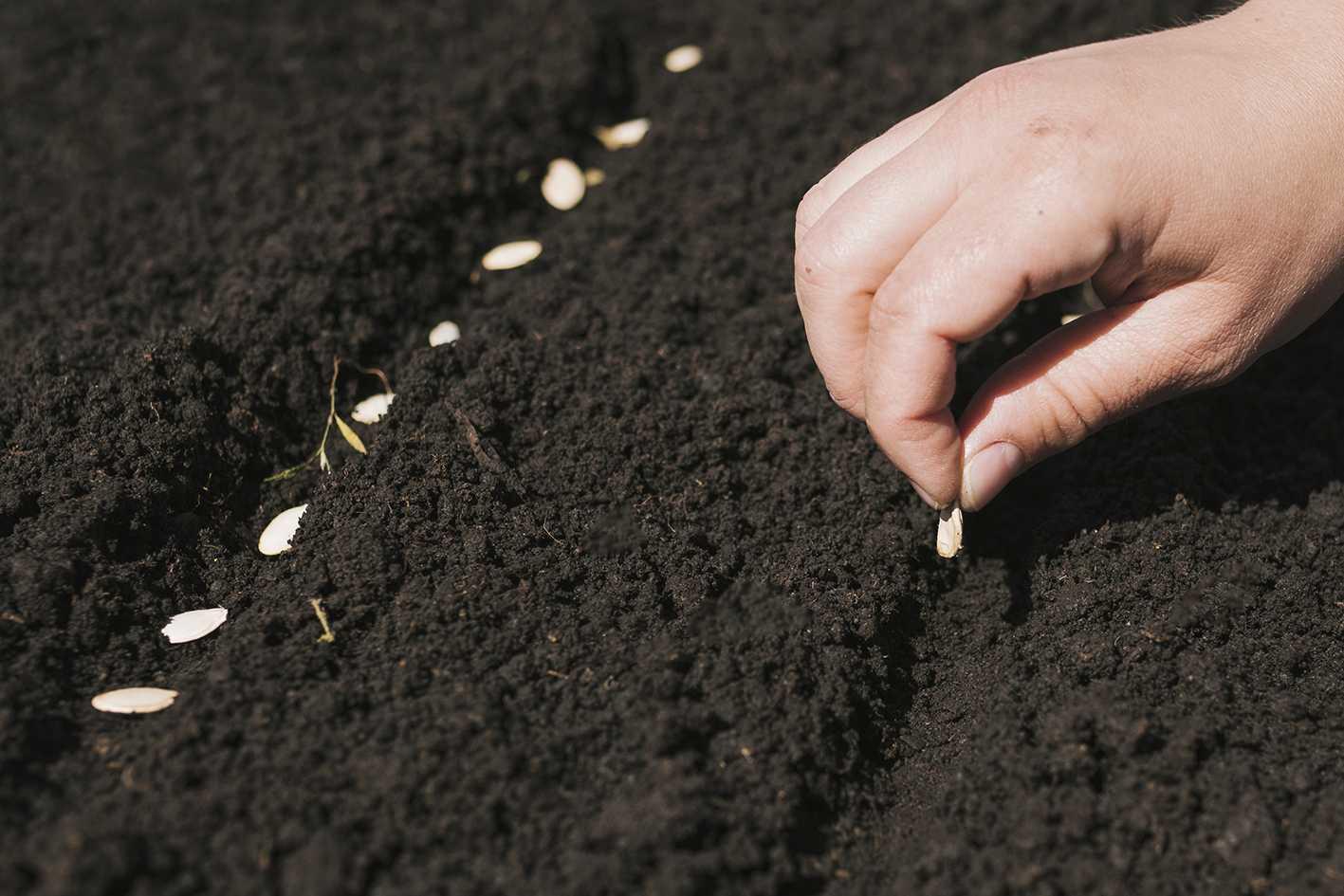 солнечная посадить семя картинка под рукой нет