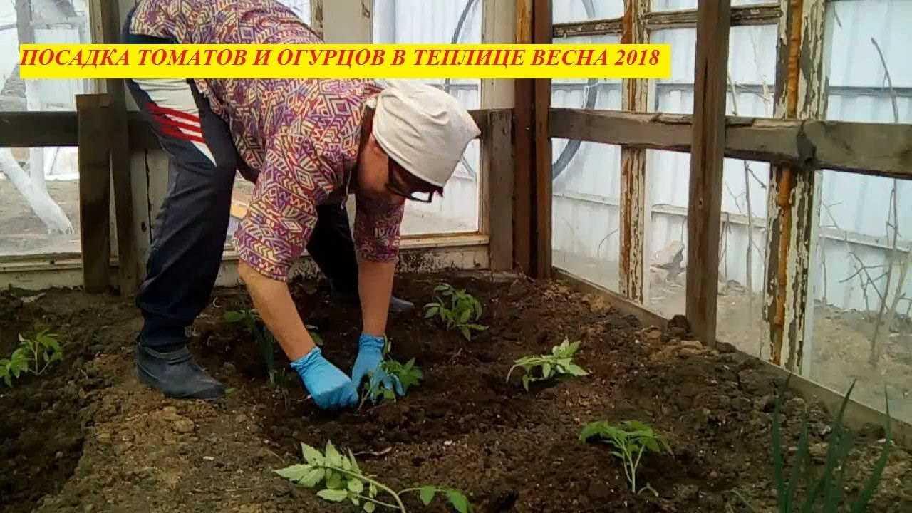 подготовка грядки под томаты в теплице весной