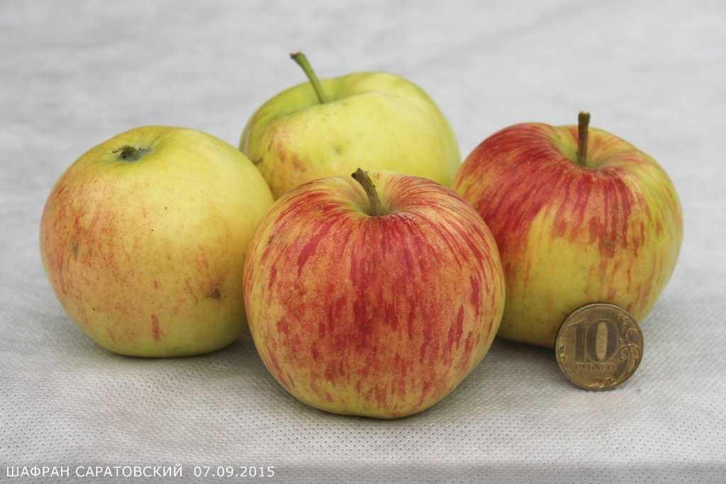 шафран картинки яблоко всему