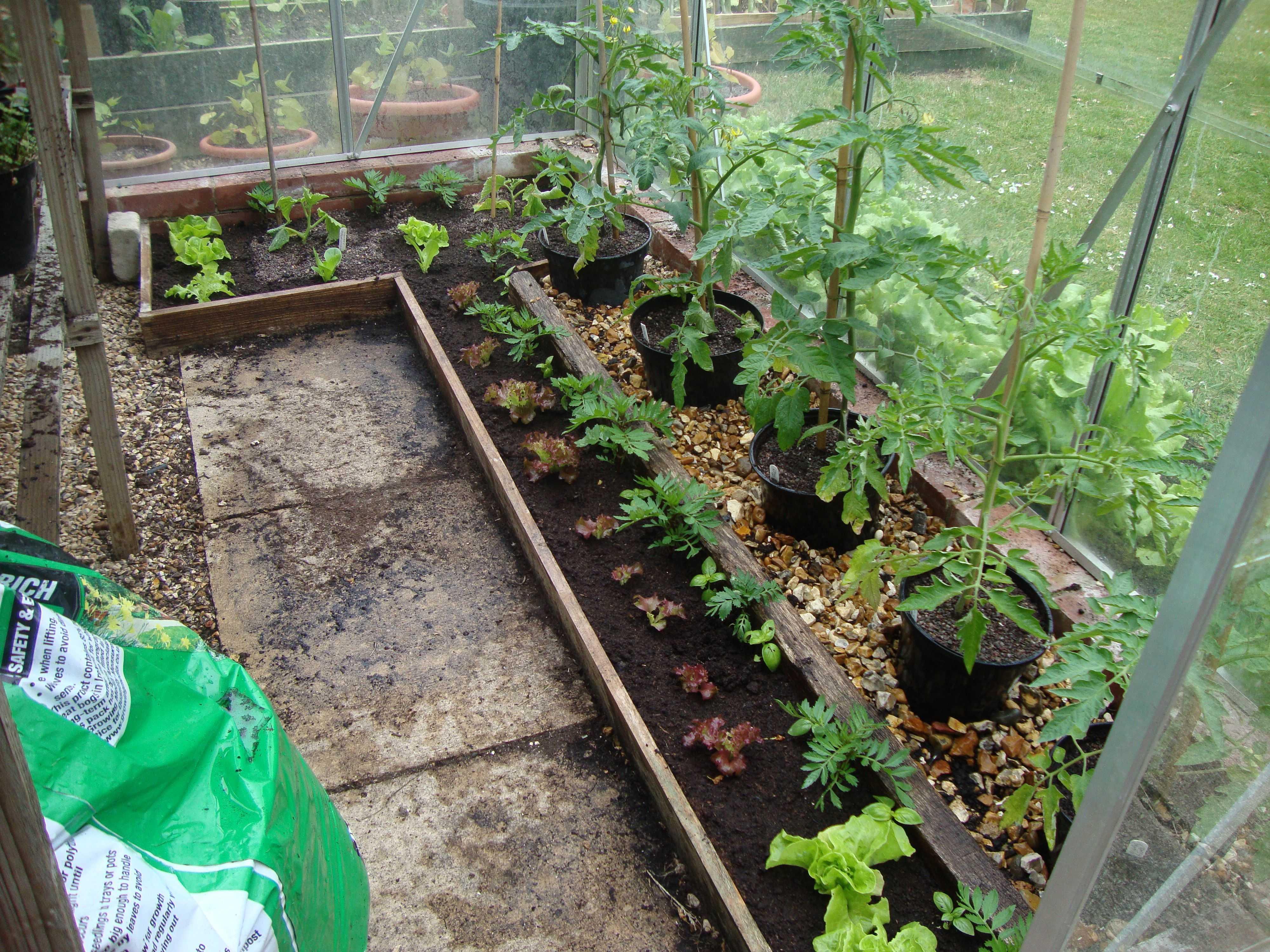 латинское как правильно сажать помидоры на рассаду фото используем именно