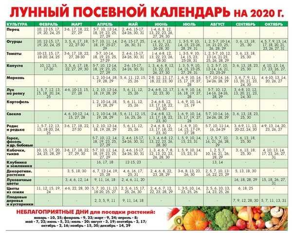 На огурцов для посева календарь лунный май
