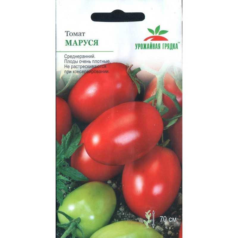 томат маруся отзывы фото наше