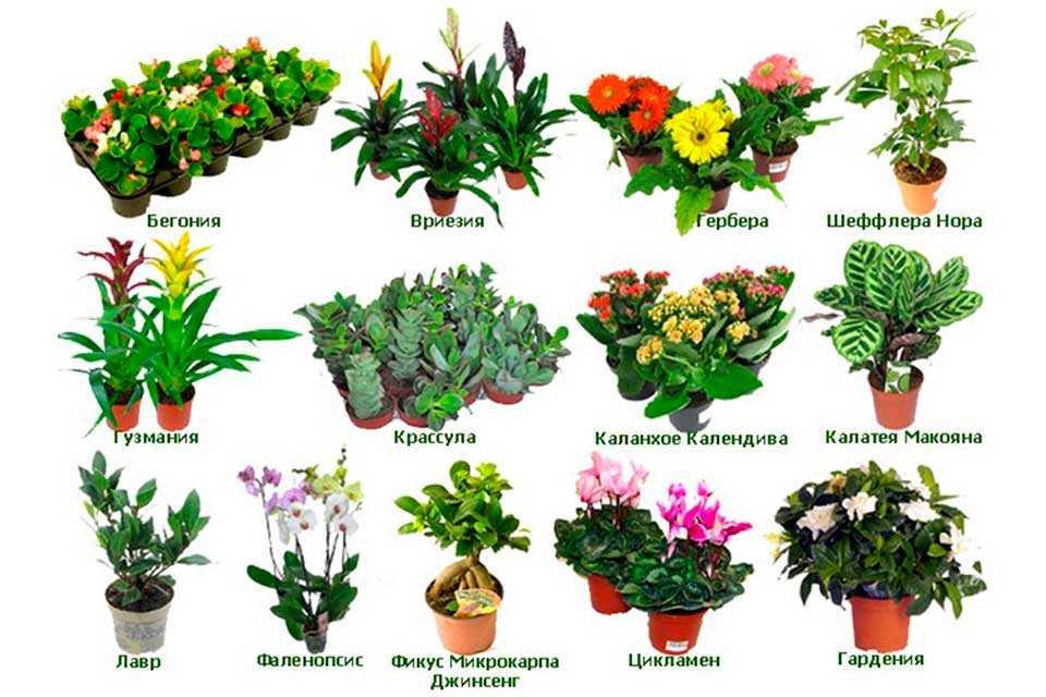 комнатные растения с картинками и названиями предлагаем