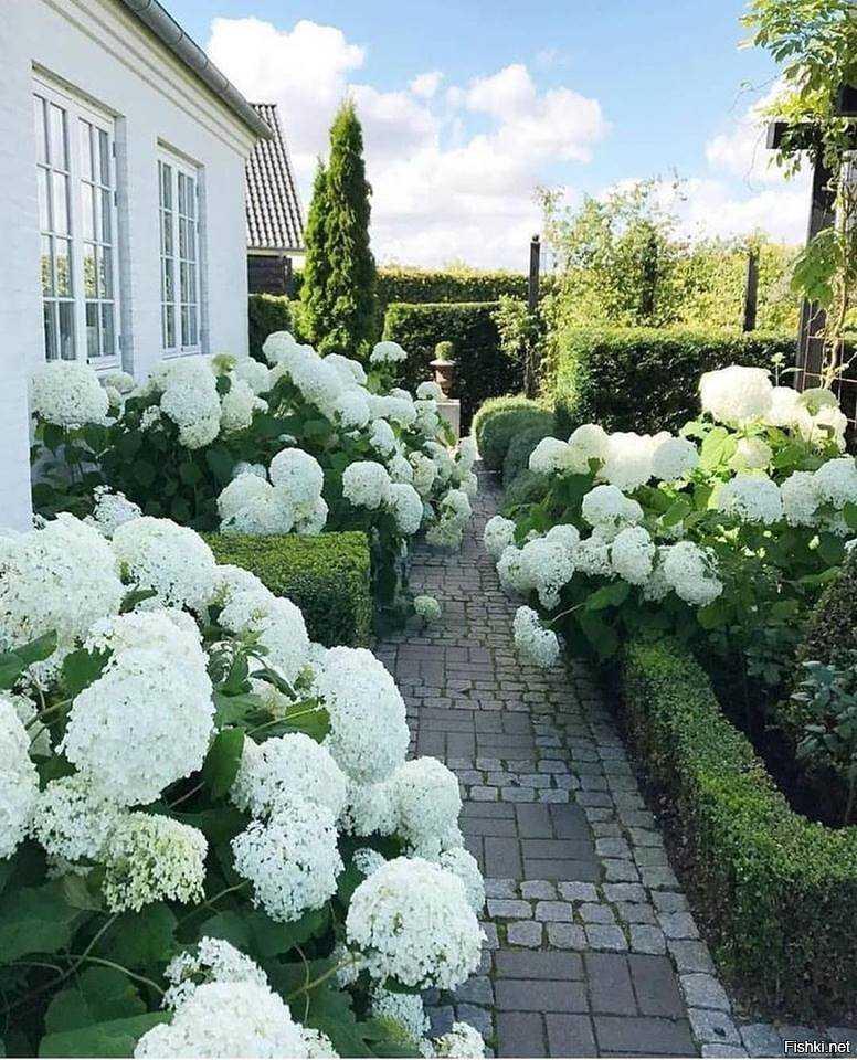 Все об использовании гортензий для украшения сада: с чем сочетается в ландшафте