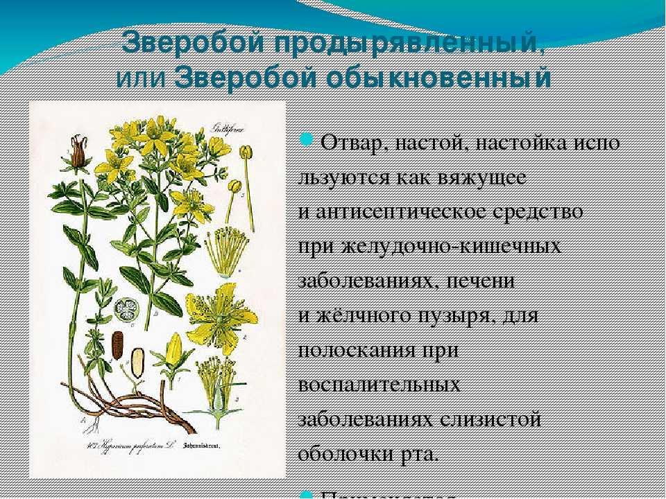 обливанием открыли травы саратовской области названия и фото сам