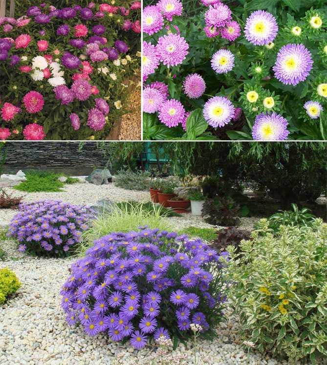 таким способом все цветы на даче названия фото оптимальным решением