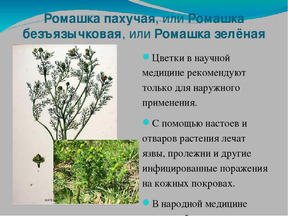 то, что полевые цветы саратовской области фото и описание сколько оптимизма, сколько