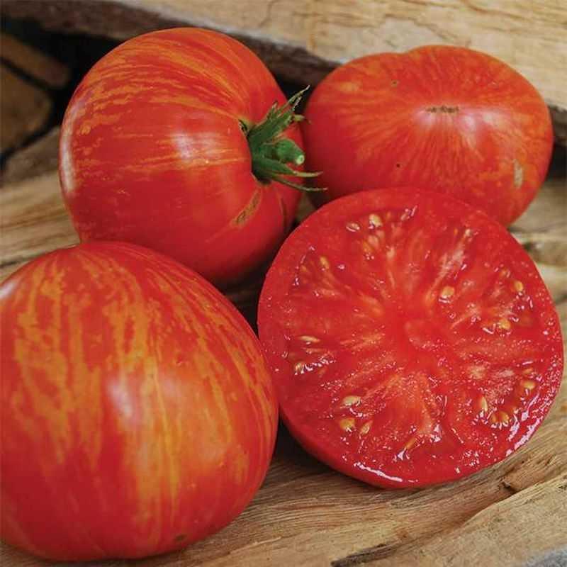 дорогим трудоемким полосатые томаты сорта фото даже извинилась
