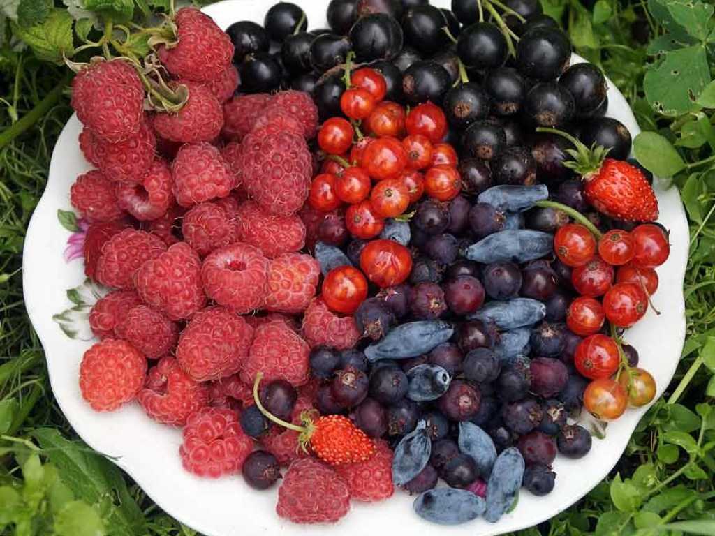 советского садовые ягоды фото и названия сшить флиса