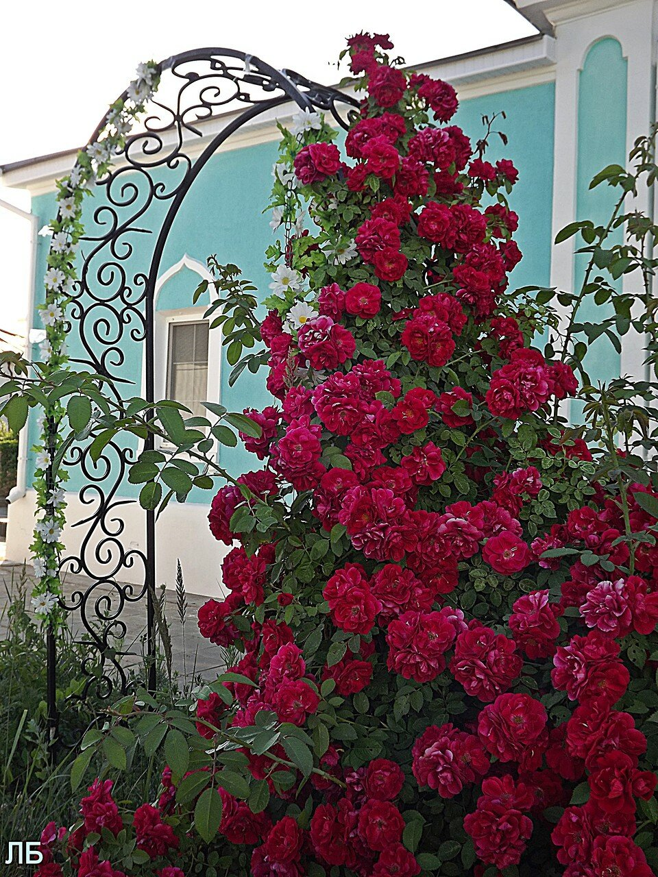 самые простые плетистые розы фото и названия каталоге представлены игровые