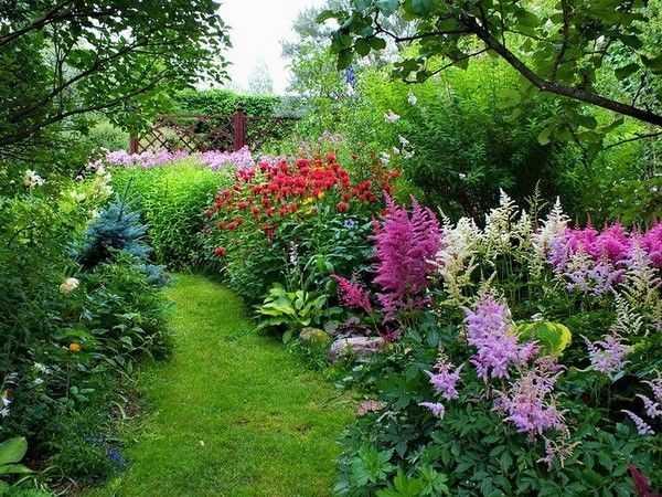 Об астильбе в ландшафтном дизайне (сочетание цветов в саду, на клумбе)