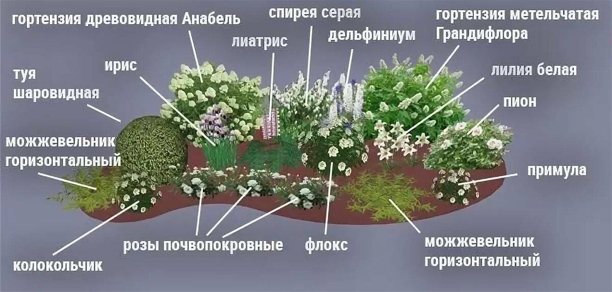 Клумба из хвойников или как сделать сад зеленым на протяжении всего года?