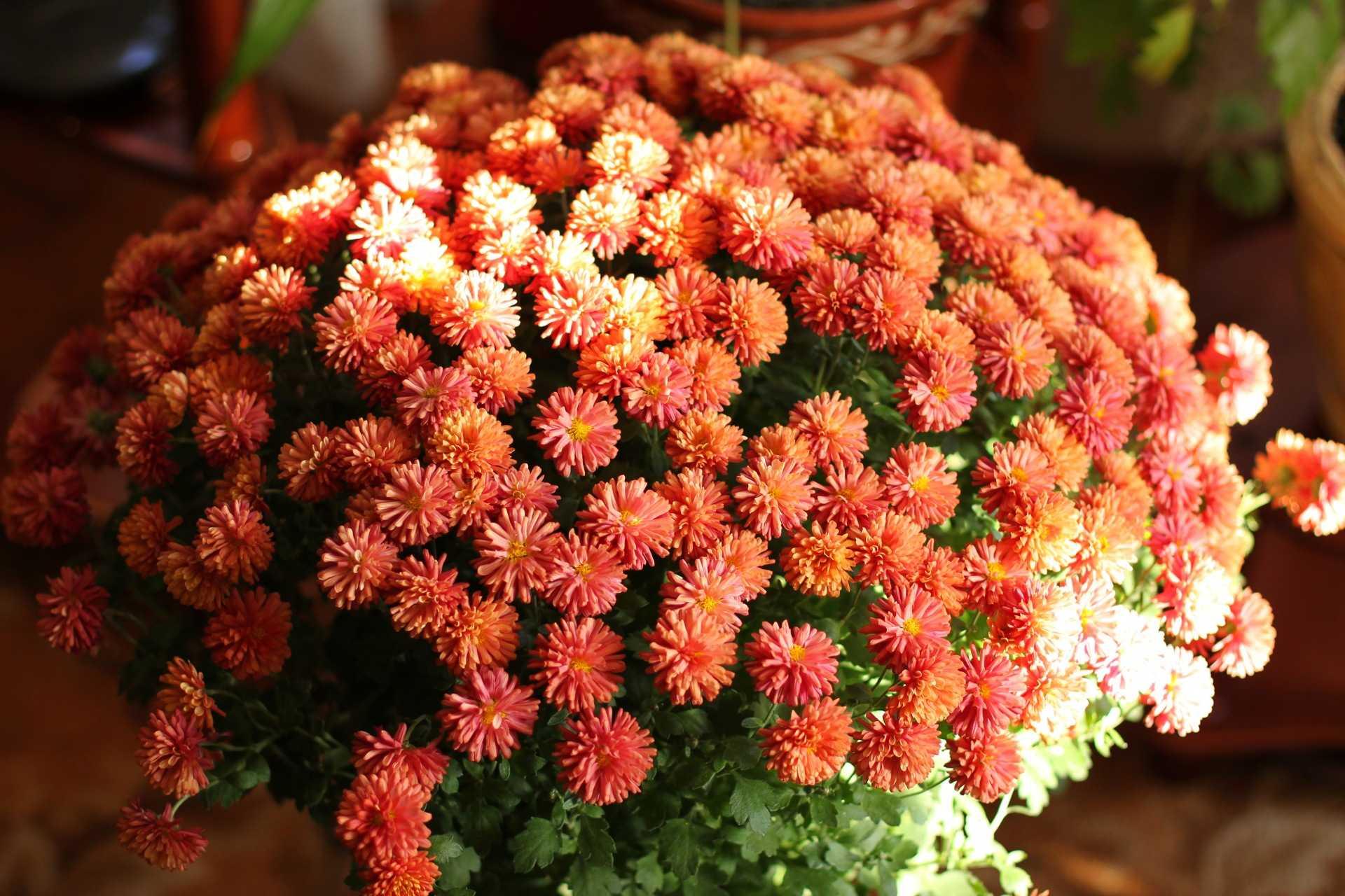 картинки дубочки цветы все кажется нереальным