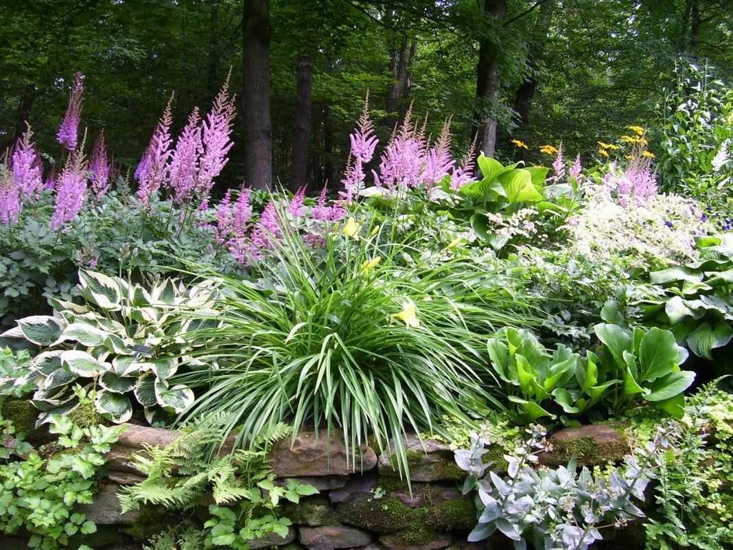 Лучшие тенелюбивые и теневыносливые растения для дачи и сада
