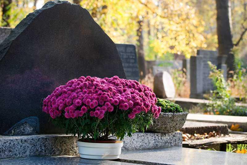 Какие цветы посадить на кладбище: многолетние и неприхотливые растения