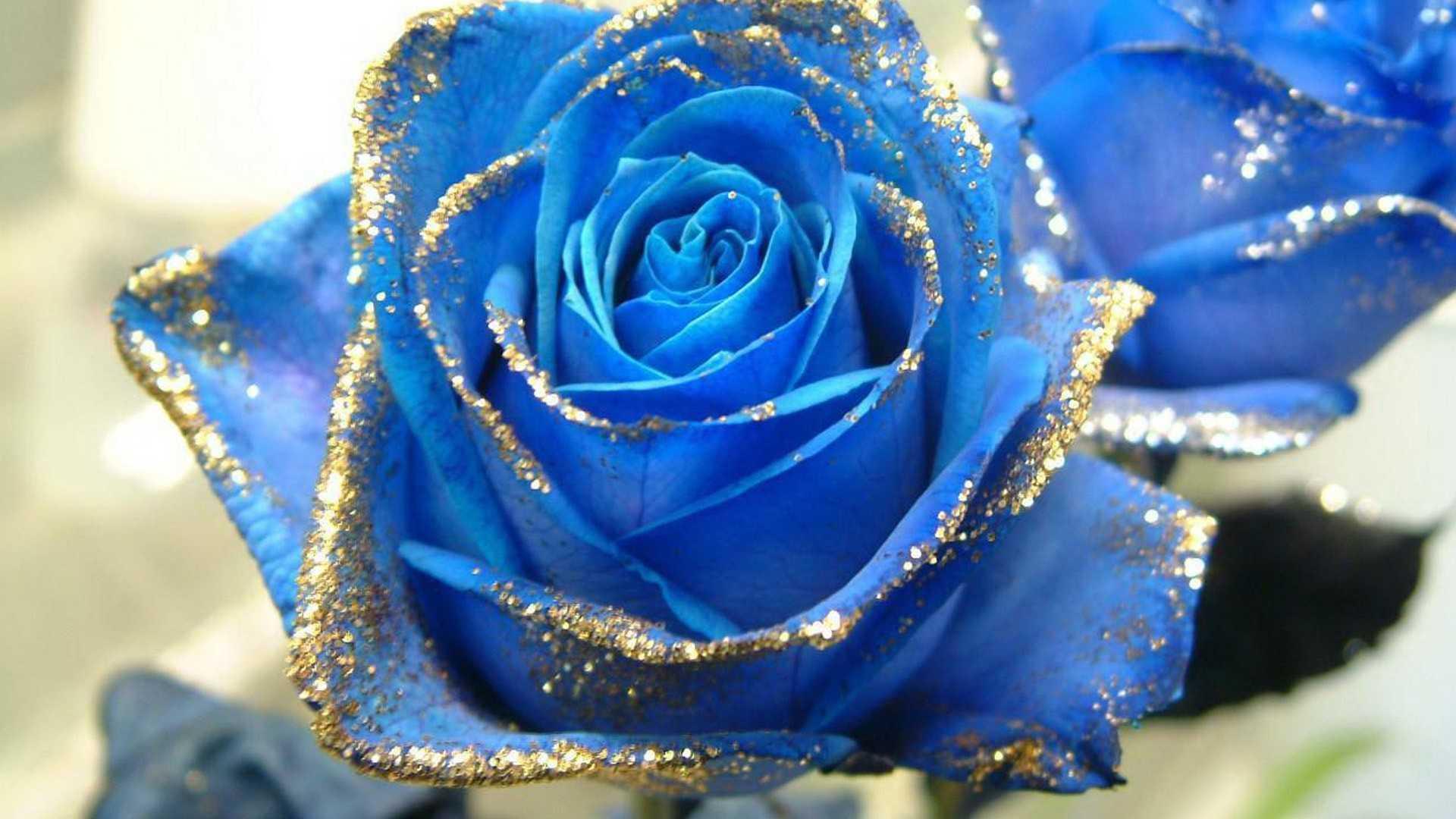 картинки цветы розы синие красивые того