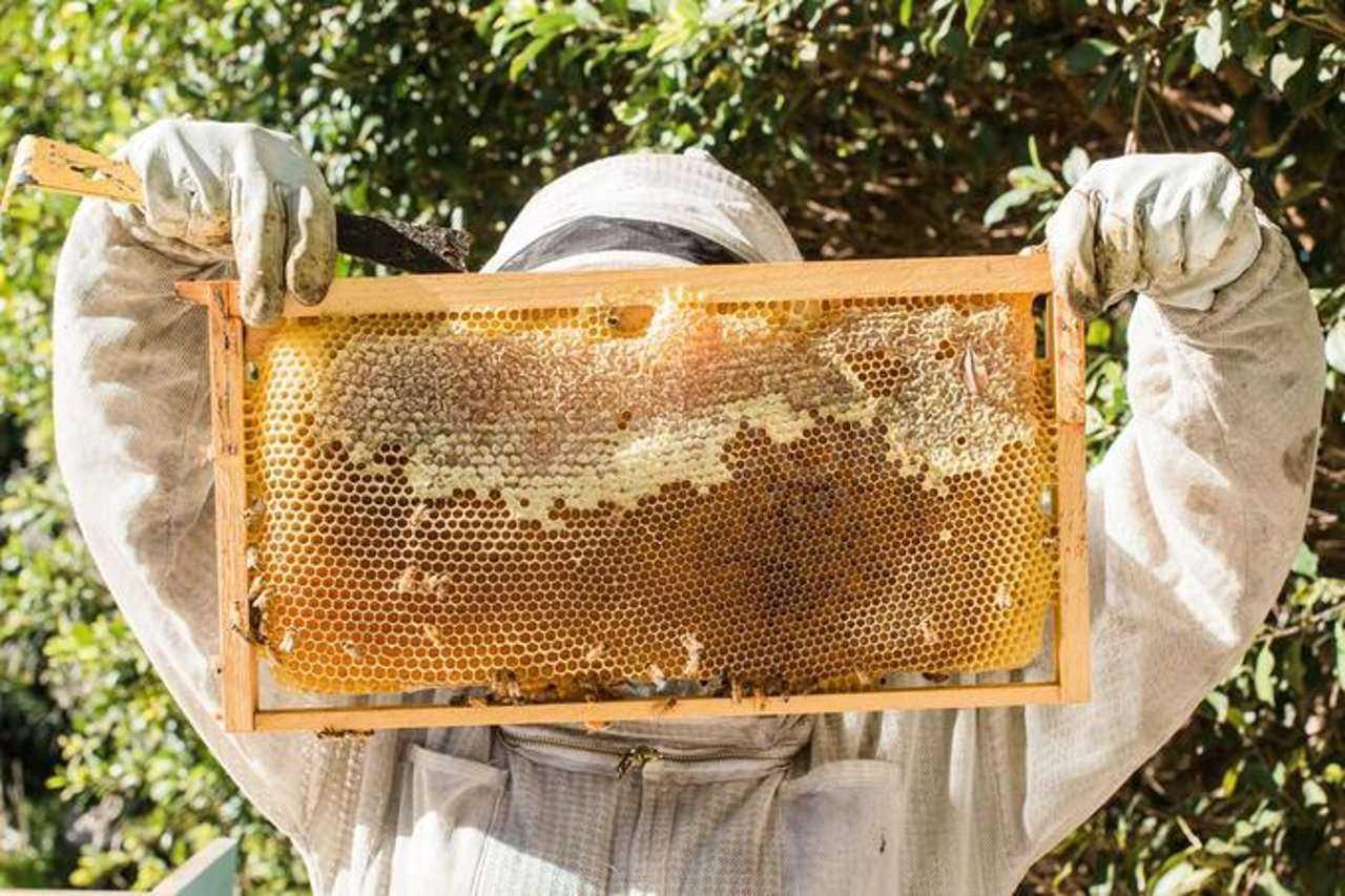 Рамка с медом в картинках