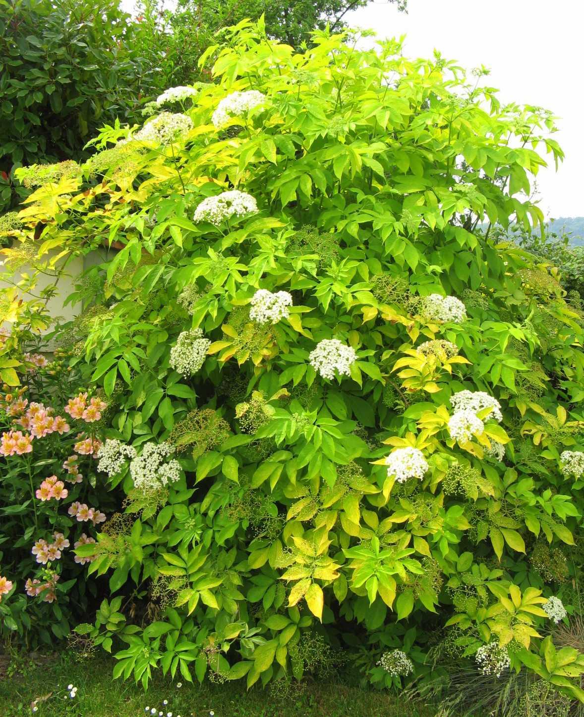 или растения и кустарники средней полосы россии фото композициях