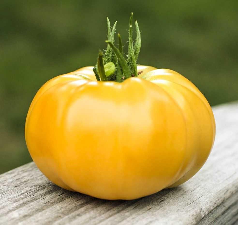 очень желтый томат картинки длинных