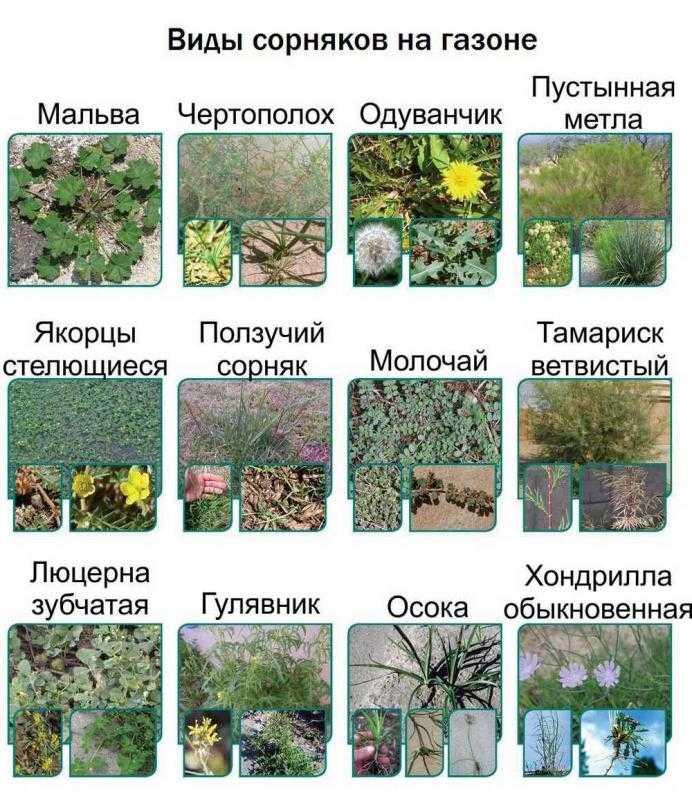 опасения, картинки сорных растений с названиями для