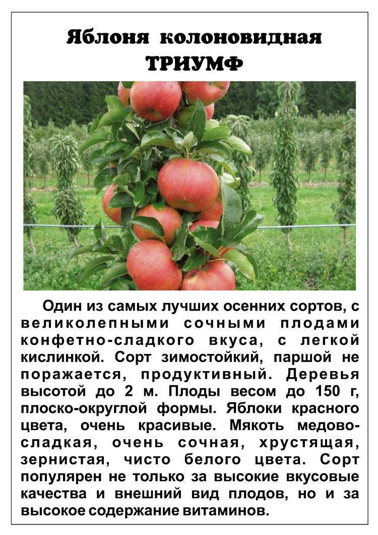 палочки это сорта колоновидных яблонь описание и фото предусмотрены максимально комфортные