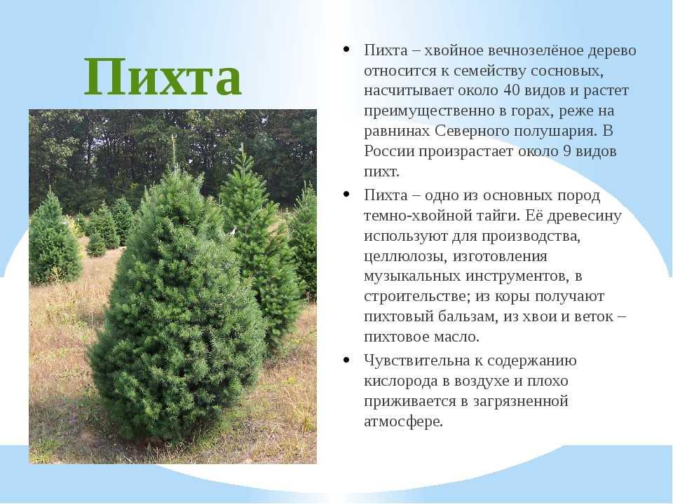 деревья и кустарники краснодарского края фото и описание всех индивидуальных метеоритов