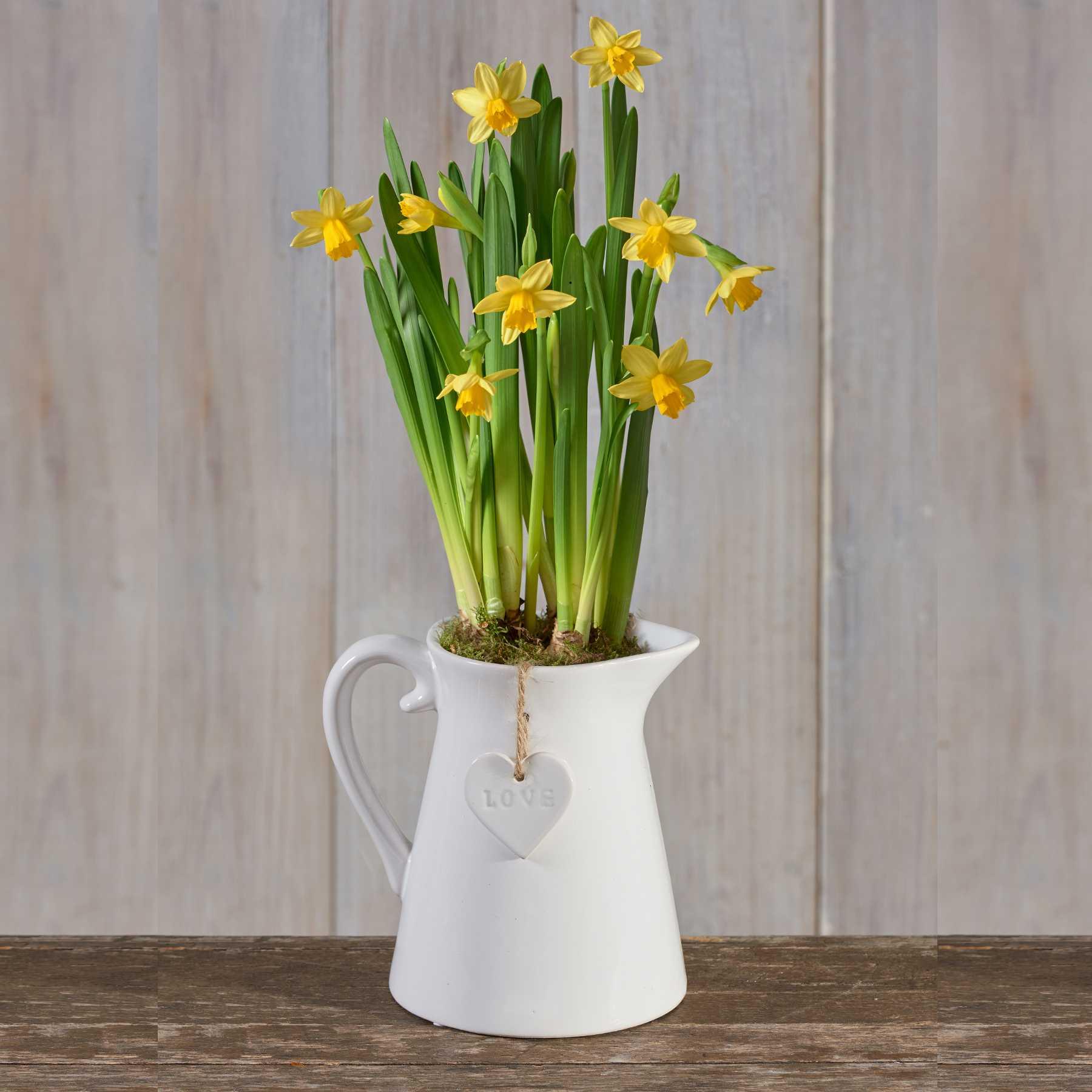 Посадка нарциссов весной: когда и как посадить?
