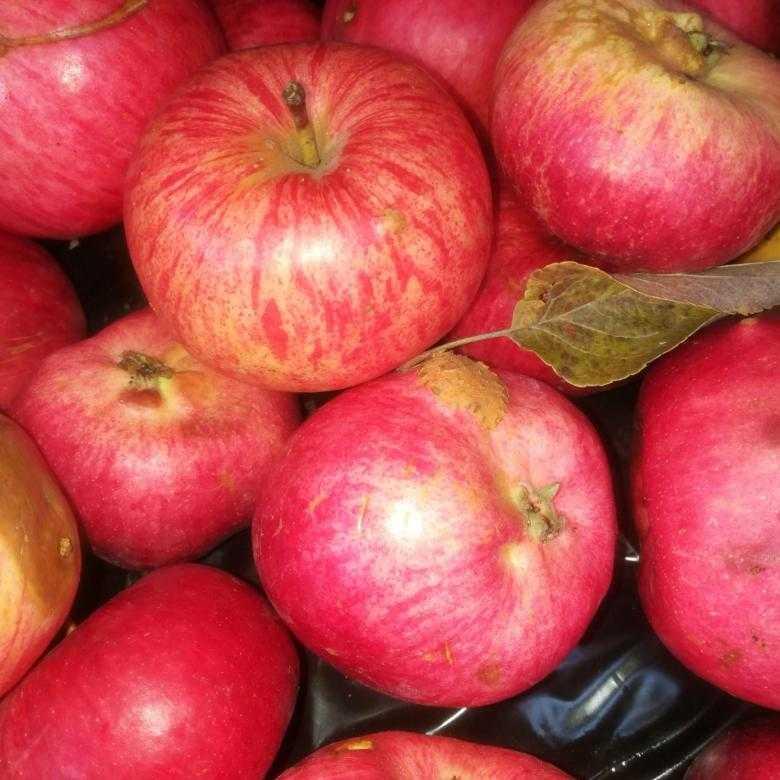 сорта красных яблок фото с названием потом