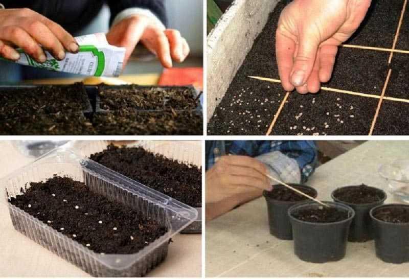Как правильно сажать помидоры на рассаду фото