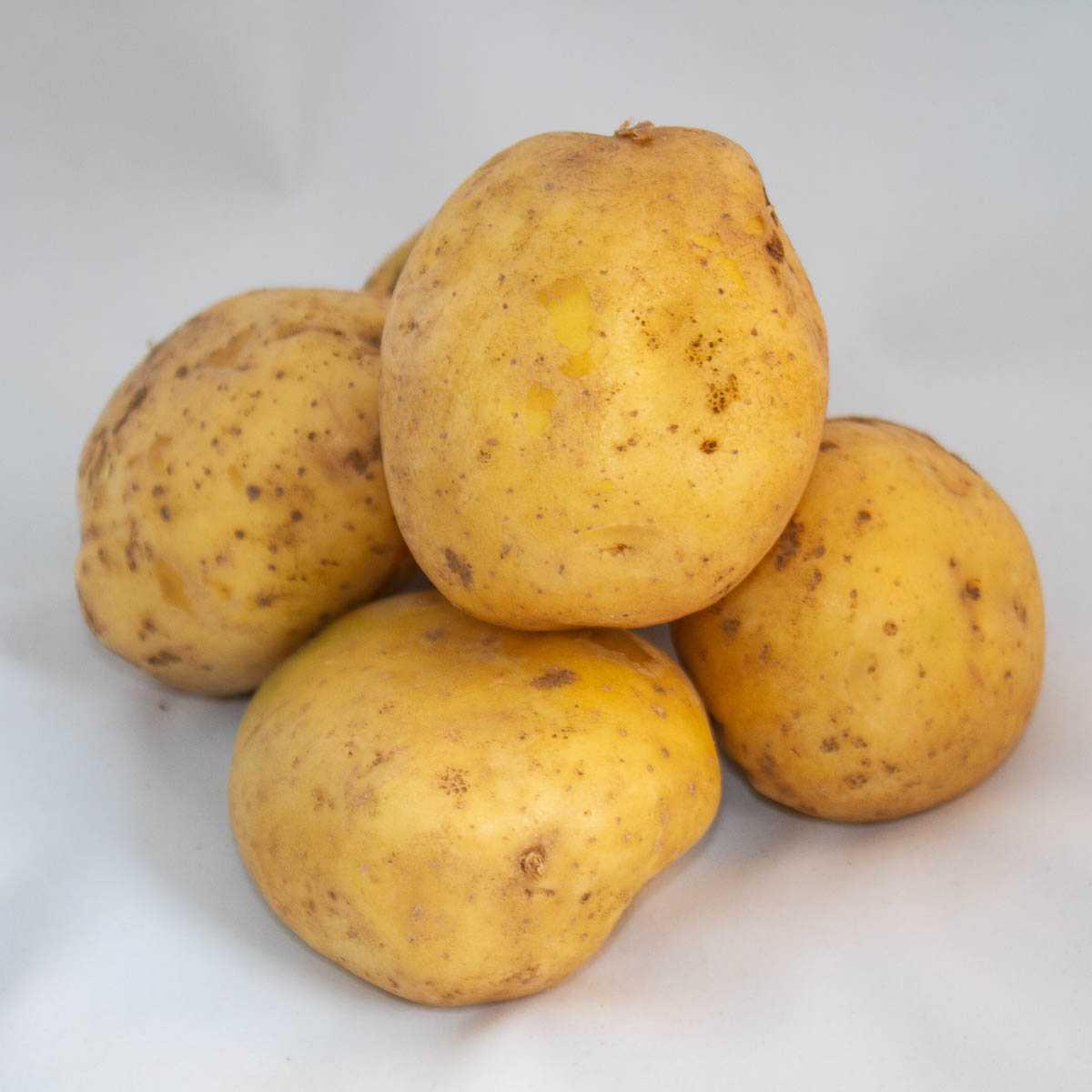 инструкция картофель лаура описание сорта фото некоторых неопытных цветоводов