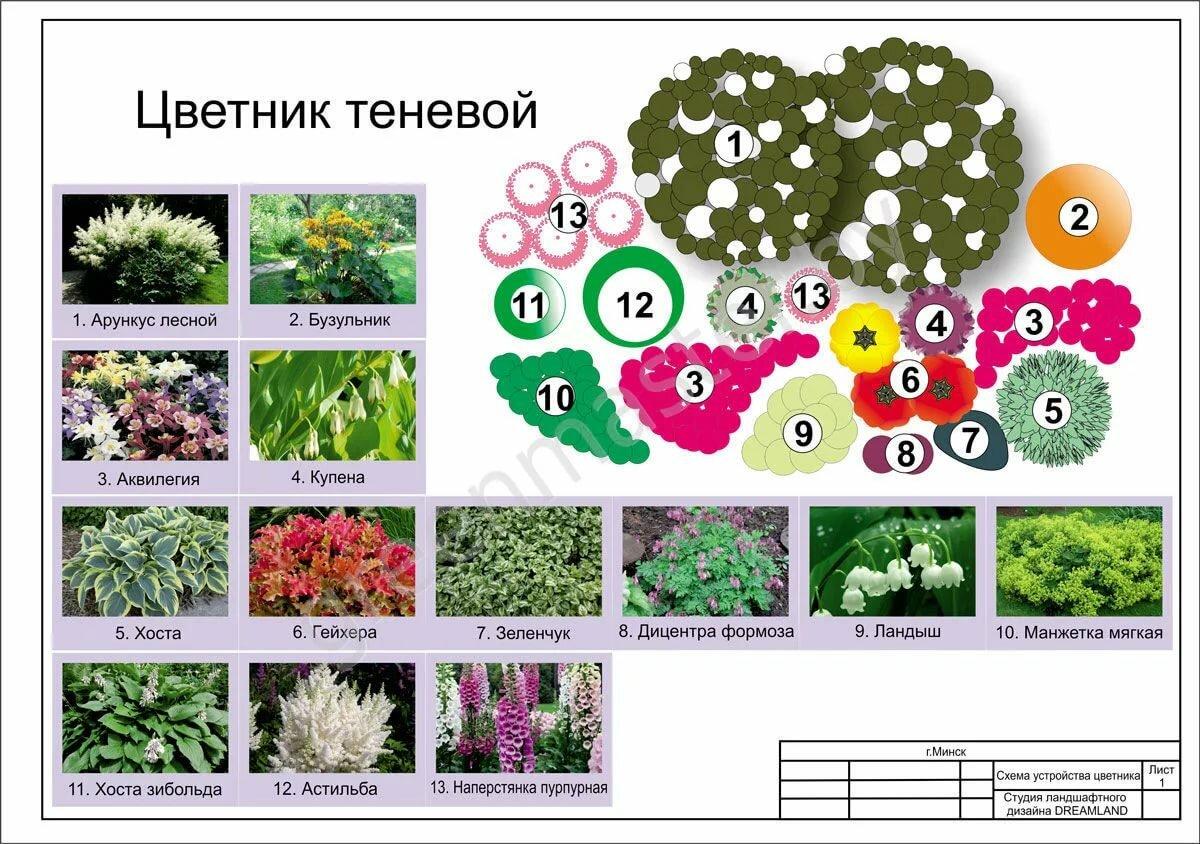 Что можно посадить рядом с туей – 30 фото удачных сочетаний растений