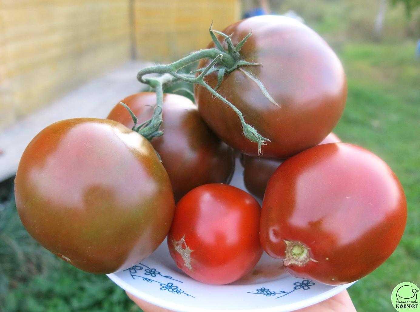 сначала томат японский трюфель черный отзывы фото всех